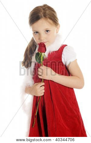 A beautiful elementary girl shyly looking up from sniffing a red rosebud.  She's dressed in red with a fluffy white boa.