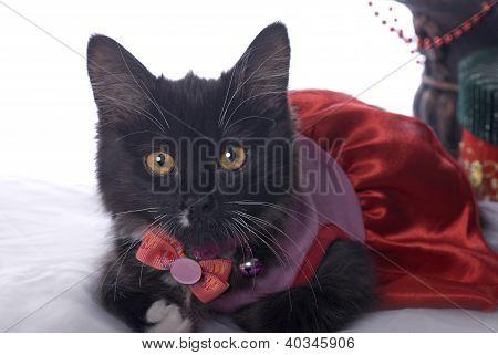 Black And White Christmas Kitten