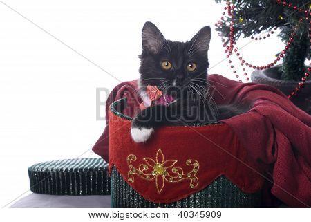 Black Kitten In Christmas Gift Box On White