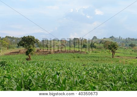 Near Rwenzori Mountains In Uganda