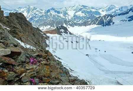 Alp Flowers And Ski Lift
