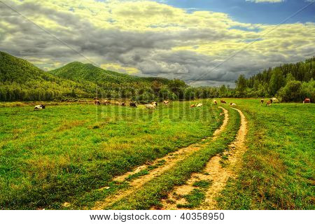 Road Through Meadow To The Mountain