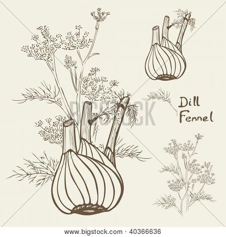 dill and / or fennel, hand drawn vector illustration