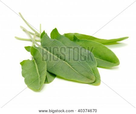 Green Sorrel Leaves Isolated On White Background