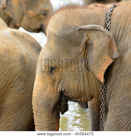 Elephant Photo Closeup