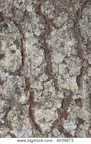 Natuurlijke textuur
