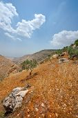 stock photo of samaria  - Olive Grove on the Slopes of the Mountains of Samaria Israel - JPG