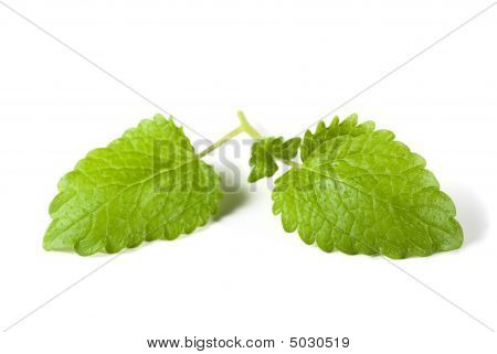 Mint Leaves Isolated 2