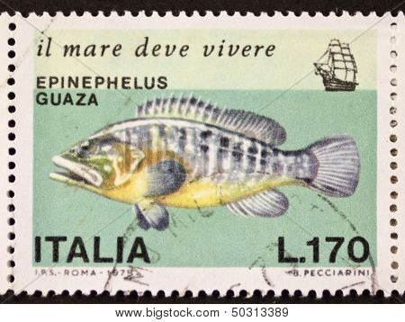 ITALY - CIRCA 1978: a stamp printed in Italy shows image of Dusky Grouper  (Epinephelus marginatus or Epinephelus guaza). Italy, circa 1978