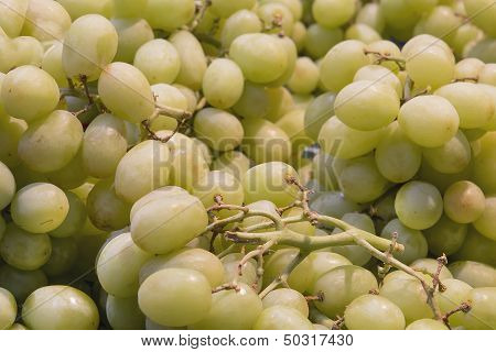 Seedless Green Grapes Closeup