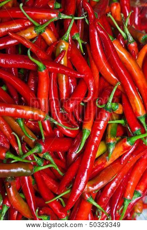 Fresh Chili Pepper In Different Colors At The Herb Market