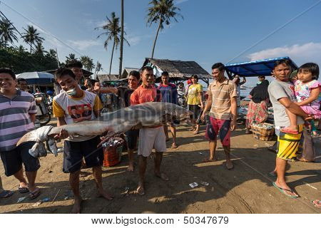 PADANG - AUGUST 25: Two fishmongers carry a freshly caught shark at a village market in Padang, West Sumatera, Indonesia on August 25, 2013. Resources from the sea is a major revenue earner.