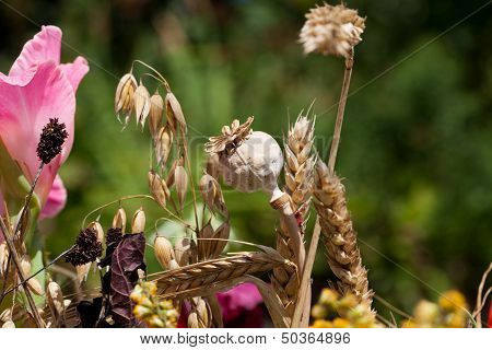 beautiful bouquets of flowers herbs and cereals