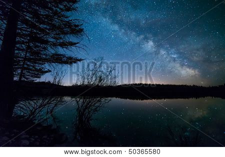 Trees With Milky Way