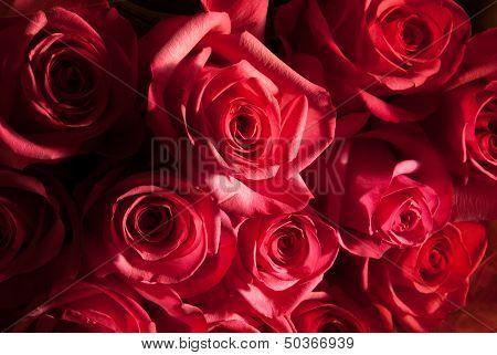 Rose Shadows