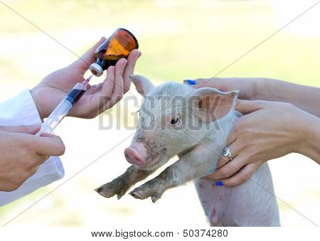 Veterinary injection
