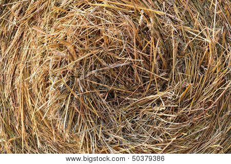 Close-up of a roll of straw on a field