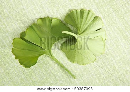 Ginkgo Leaves On Green Background.