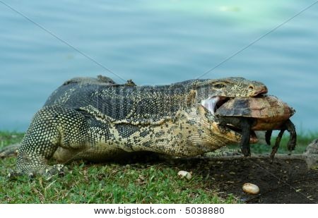 Lizard At Dinner
