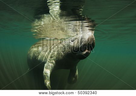 Manatee Breath