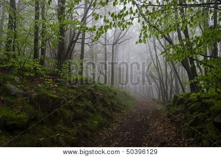 Foggy Track In A Wild Spring Forest, France