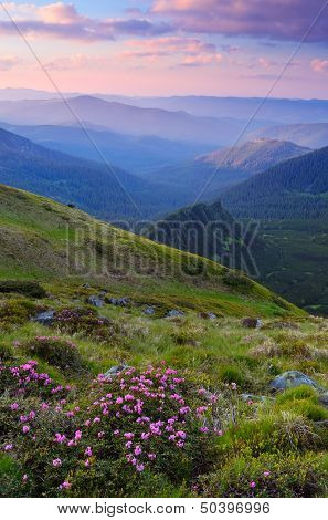 Evening landscape with a bush of pink flowers in the mountains