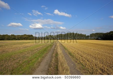 Farm Track With Poplar Trees