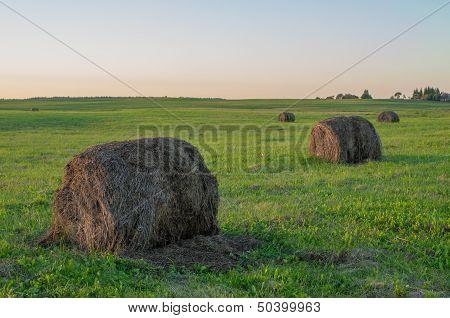 Large Old Baled Round Hay Bales
