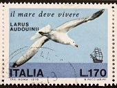 ITALY - CIRCA 1978: a stamp printed in Italy shows image of  Audouin's Gull (Ichthyaetus audouinii),
