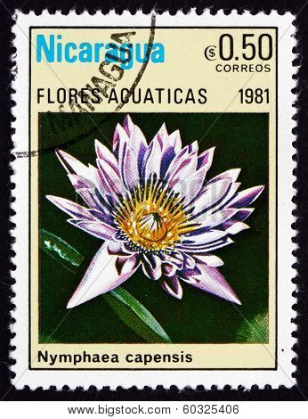 Postage Stamp Nicaragua 1981 Cape Blue Water Lily, Aquatic Flowe