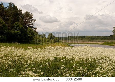 Summer Landscape In Lithuania