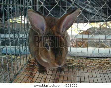 Rabbit In Animal Shelter