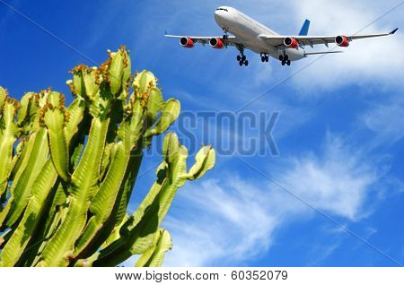 Plane is about to land at a tropical destination. The plant is in blure the plane is in focus.