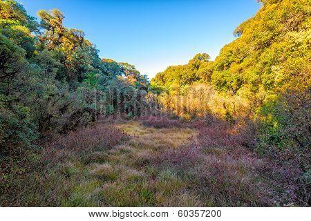 Grass Field Tree With Blue Sky