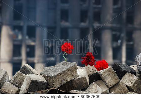 Carnations On A Barricade In Kiev