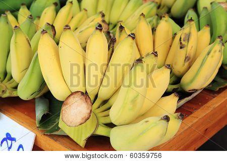 Banana Bunch Group