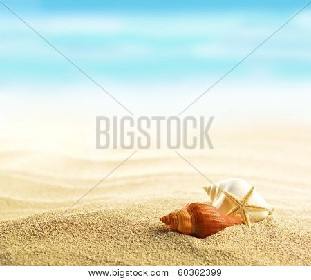 Shells and starfish on sandy beach