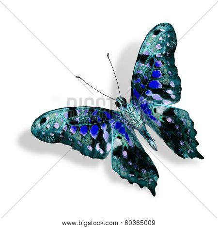 Beautiful Nice Blue Butterfly