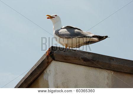 seagull against clear blue sky