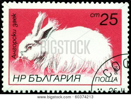 Vintage  Postage Stamp. Angora Rabbit.