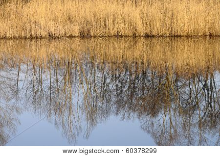 Saint Felix Lake And Reeds