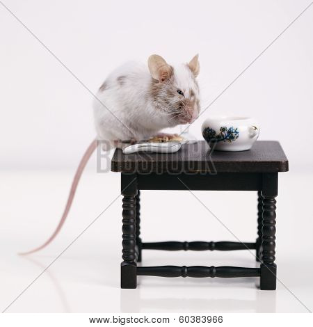 Mouse dines at the table