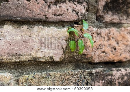 New Plant Germinates From Brickwall