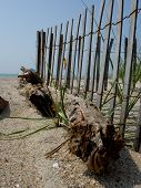 picture of driftwood fence  - An interesting perspective of a piece of drift wood found at Carolina Beach - JPG
