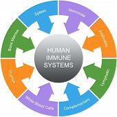 picture of hormone  - Immune System Word Circles Concept with great terms such as spleen hormones antibodies and more - JPG