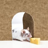 foto of mouse trap  - little mouse coming out of it - JPG