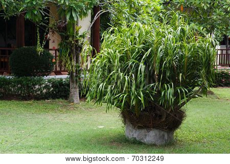 Lush Green, Gardening, Landscaping, Park Decoration And Design