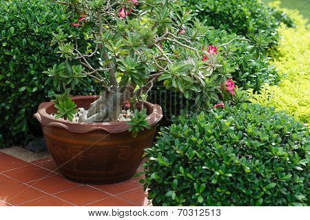 Ceramic Planter With Pink Flowers On Summer Patio