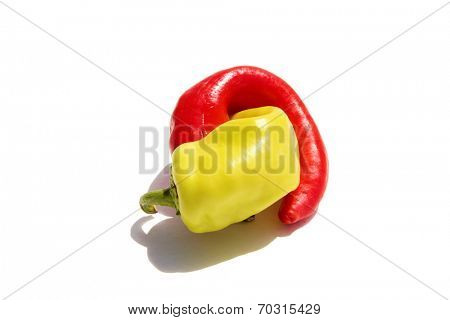A Hot Red and Yellow Pepper entangle in an erotic embrace isolated on white with room for your text. Peppers are known as Aphrodisiacs around the world by various people and cultures.