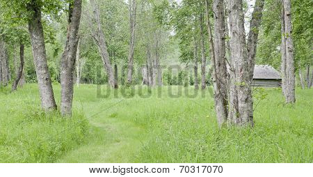 Meadows and trees in Nordic farming area.